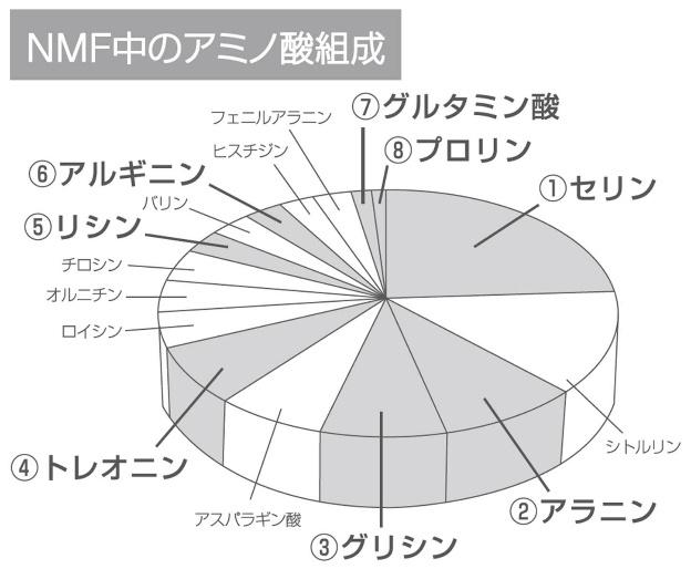 NMF中のアミノ酸組成